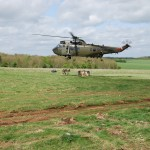 Exercise GREEN DRAGON, Logistic Support Squadron